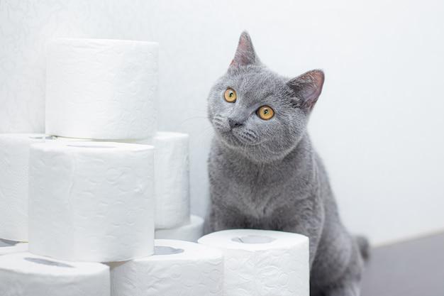 Chat et papier toilette.