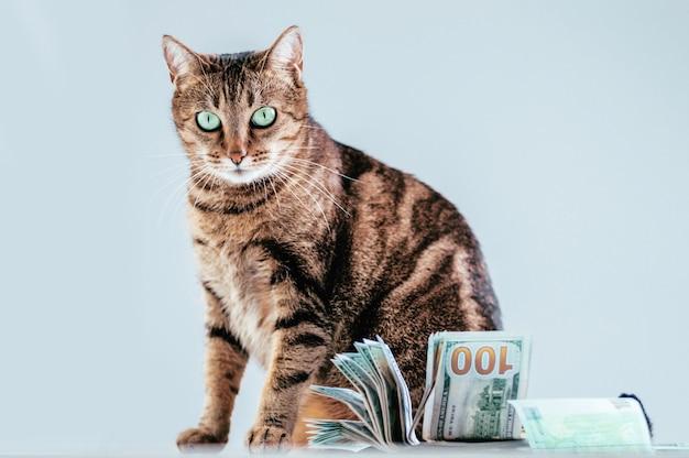 Chat sur un paquet d'argent. concept de don d'animaux