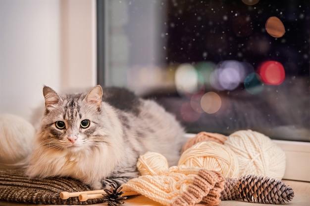 Chat pelucheux gras gris est assis sur un rebord de fenêtre parmi des boules de laine sur fond de bokeh multicolore dans le ciel nocturne