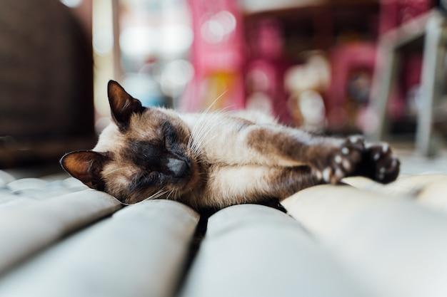 Chat persan couché à l'extérieur