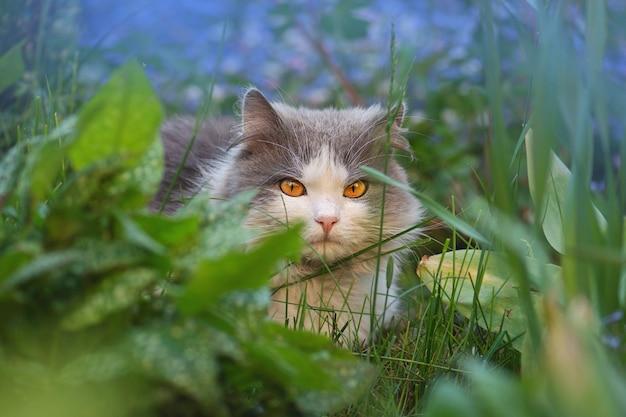 Chat à poils courts dans le jardin d'été le soir. portrait d'un chat mignon assis dans un jardin ensoleillé