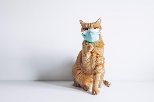 Chat portant un masque médical