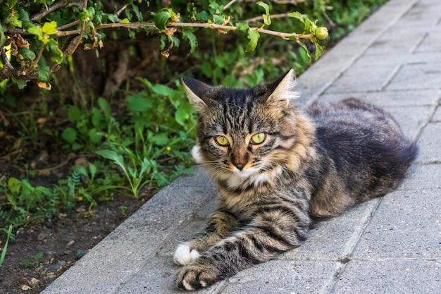 Chat prenant un bain de soleil dans la rue de la vieille ville