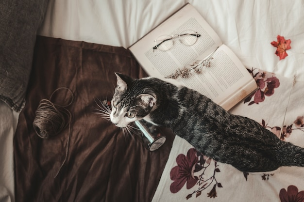 Chat près du livre et du fil