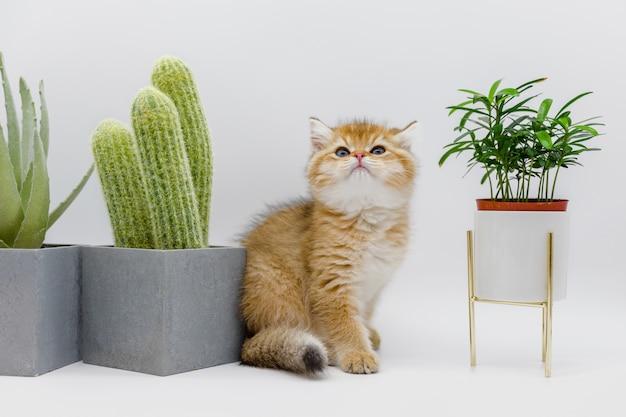 Chat près des plantes d'intérieur