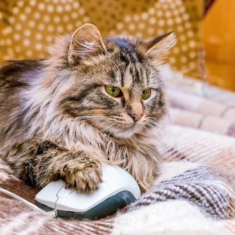 Un chat près d'une souris d'ordinateur. travaillez au bureau à l'ordinateur. format carré