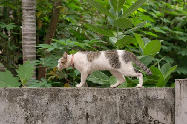 Chat qui marche accroupi sur un mur de pierres et de blocs
