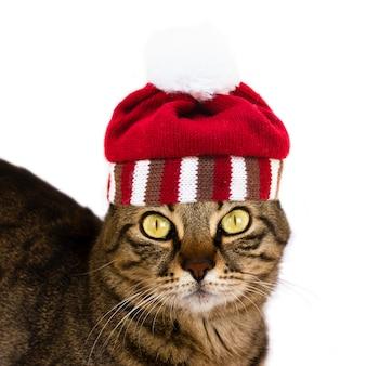 Un chat rayé avec un chapeau rayé tricoté avec un pompon regarde la caméra. isolé