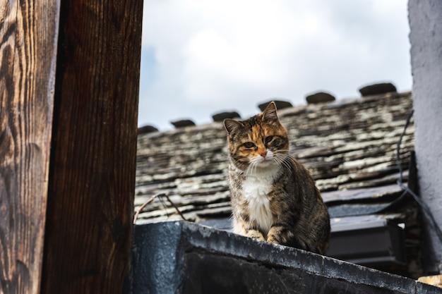 Chat rayé commun sur un fond d'une maison rurale.