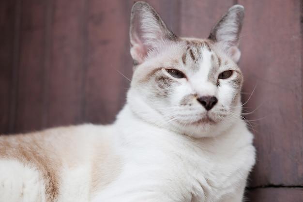 Chat rayé gris profiter et assis sur le plancher en bois dans la maison avec la lumière naturelle du soleil.