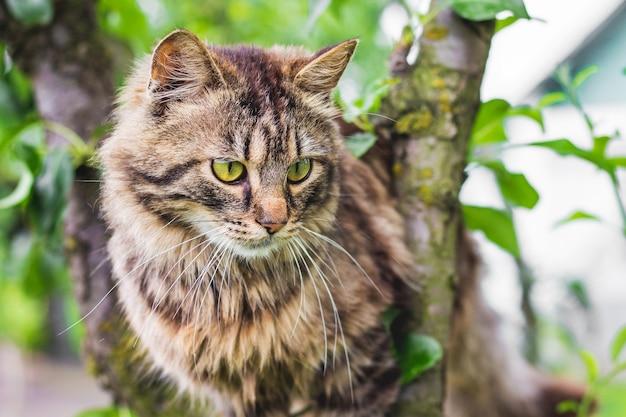 Chat rayé moelleux sur un arbre au milieu d'une feuille verte