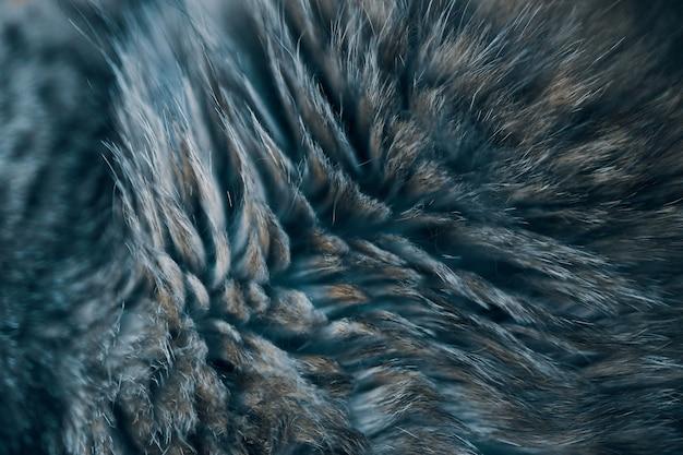 Chat à rayures de texture de fond. laine gros plan, photo noir et blanc