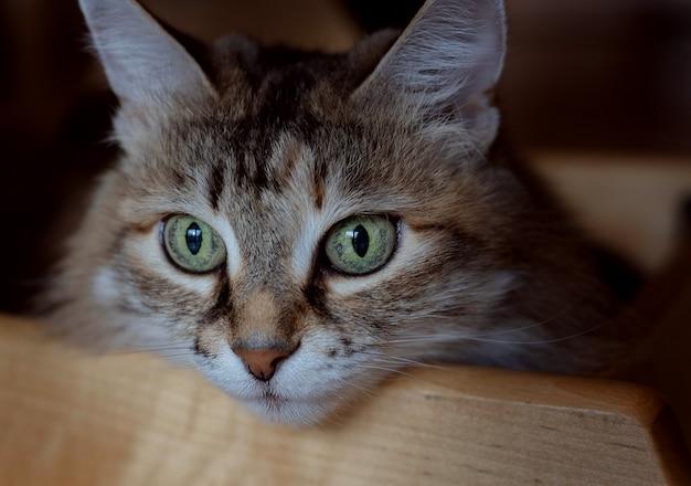 Le chat regarde par la fenêtre