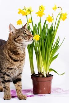 Le chat renifle des fleurs