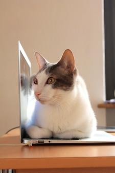 Chat repose sur l'ordinateur