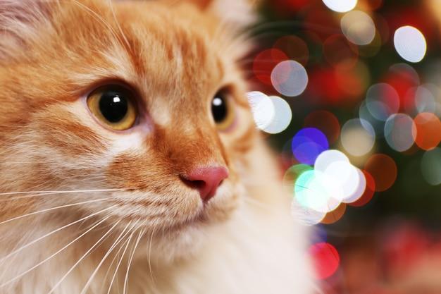 Chat rouge adorable sur l'arbre de noël