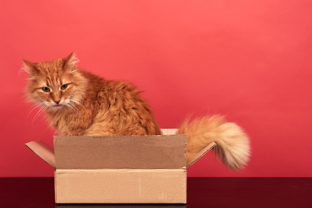 Chat rouge adulte assis dans une boîte en carton brun sur fond rouge