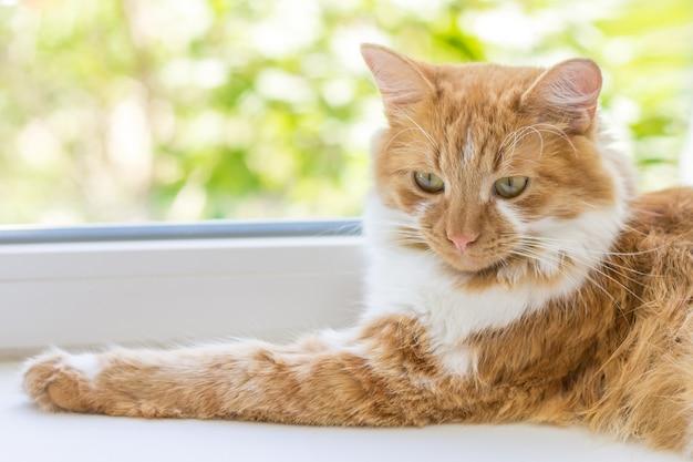 Chat rouge allongé sur un rebord de fenêtre