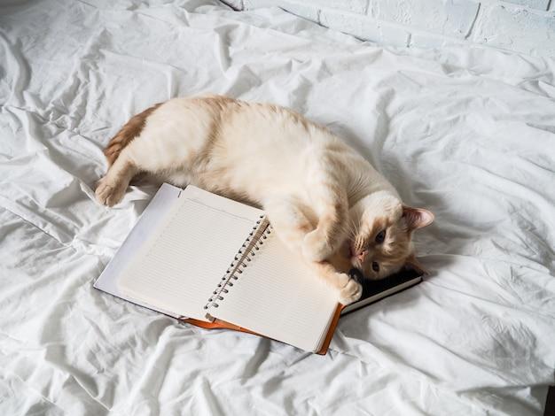 Chat rouge blanc allongé sur un lit blanc contre un mur de briques, repos, travail indépendant à domicile, profession en ligne. le chat joue avec un bloc-notes