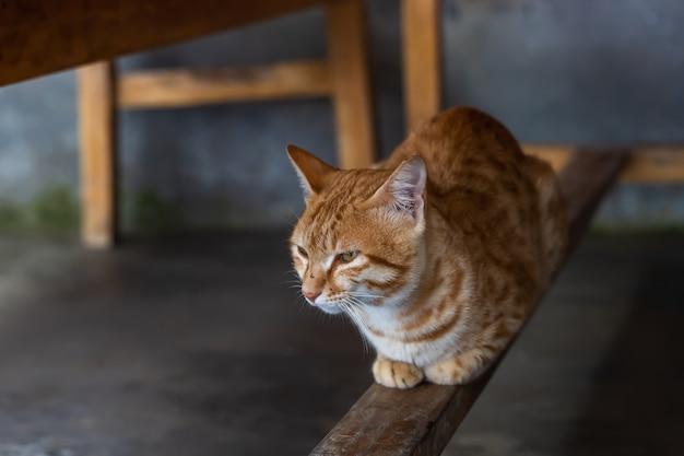 Chat rouge domestique mignon assis sous la table sur la barre transversale en bois.