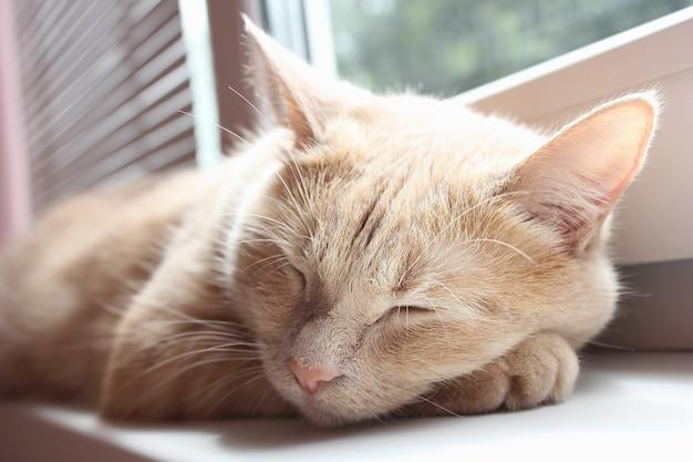 Chat rouge dort sur le rebord de la fenêtre