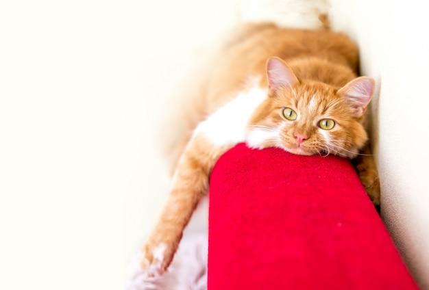 Chat rouge est allongé sur un canapé rouge