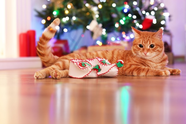 Chat rouge à la maison à noël