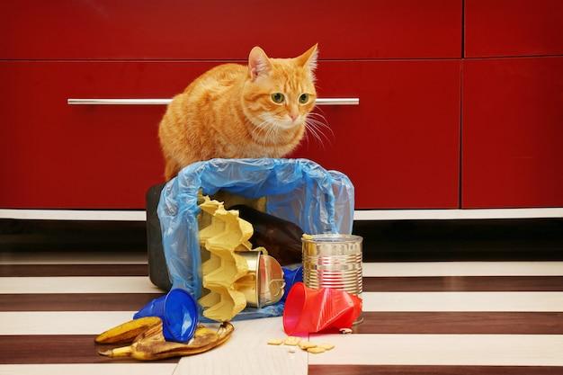 Chat rouge à plein panier à ordures inversé sur le sol de la cuisine