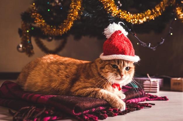 Le chat rouge porte le chapeau du père noël sous le sapin de noël.