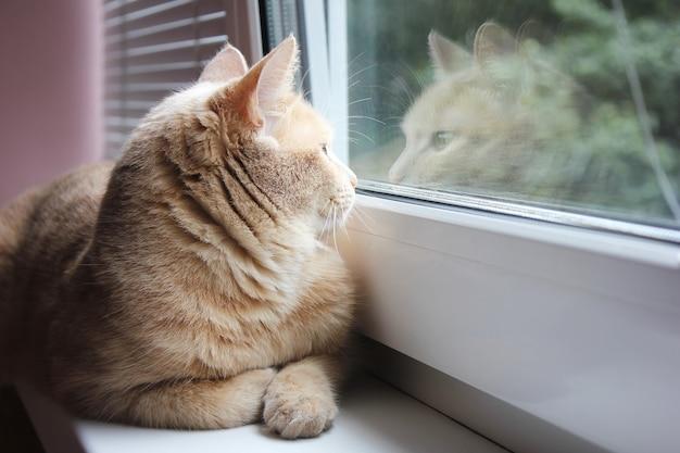 Chat rouge regardant par la fenêtre et son reflet dans le verre
