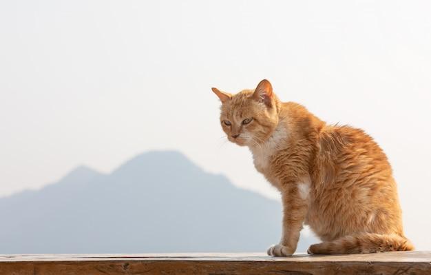 Chat rouge se prélassant au soleil avec fond de montagne.
