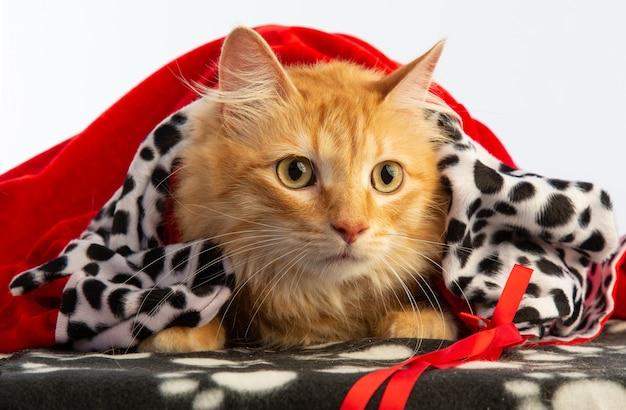 Chat rouge tigre avec une cape rouge à christamas