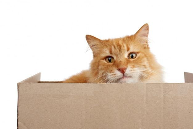 Chat roux adulte assis dans une boîte en carton brun sur un espace blanc