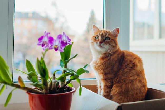 Chat roux assis dans une boîte en carton sur le rebord de la fenêtre à la maison. détente pour animaux par les plantes