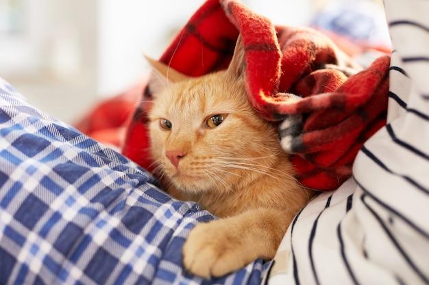 Chat roux enveloppé dans une couverture confortable