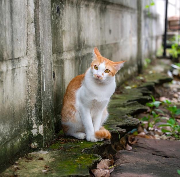 Chat roux est assis sur un mur, regardant à huis clos.