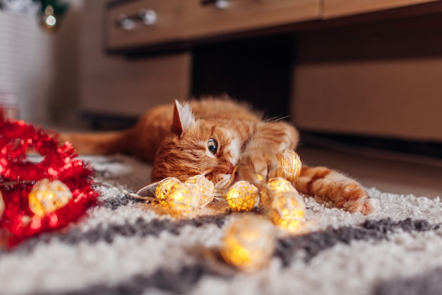 Chat roux jouant avec une guirlande sous l'arbre de noël