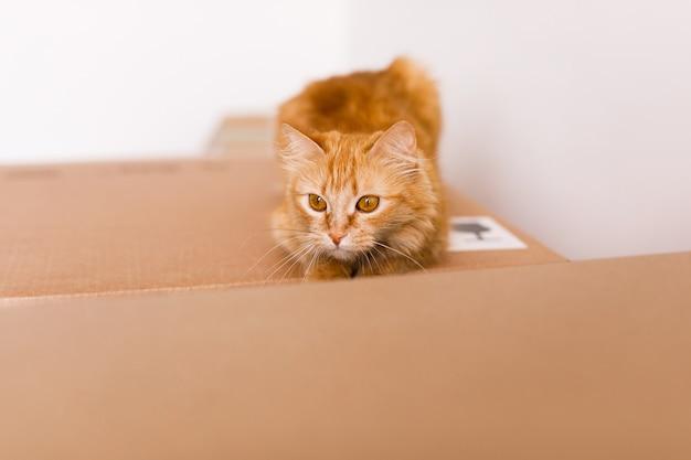 Chat roux mignon dans une boîte en carton sur le plancher à la maison