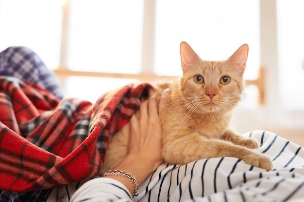Chat roux relaxant avec le propriétaire