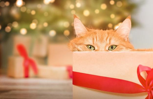 Un chat roux rusé sort d'une boîte-cadeau sur fond d'arbre de noël