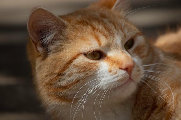 Chat roux se repose dans un parterre de fleurs vert en été chat roux domestique