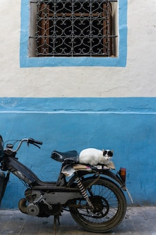 Chat de rue dans les rues de marrakech et d'essaouira au maroc
