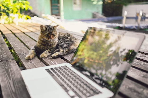 Chat de rue moelleux assis sur un banc en bois à côté d'un ordinateur portable avec des reflets d'arbres à l'extérieur dans le jardin d'été. concept de travail en ligne à distance