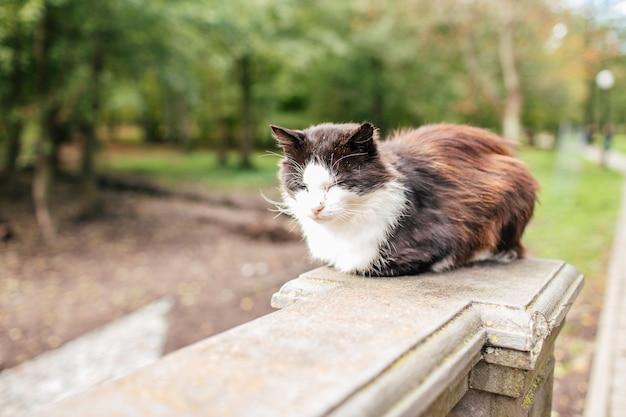 Chat de rue noir et blanc. chat errant, assis sur le trottoir dans un parc. le concept du problème des animaux sans abri
