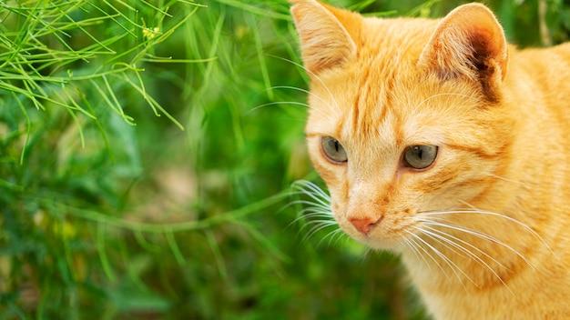 Chat sans-abri de couleur rouge dans le parc