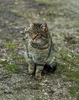 Chat sans-abri à l'extérieur