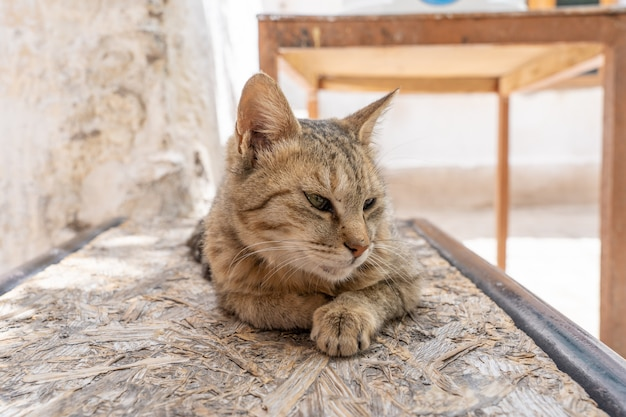 Chat sans abri à leh ladakh au nord de l'inde