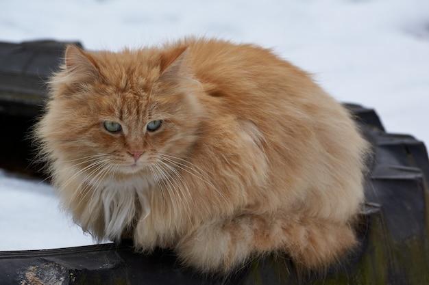 Chat sans abri se promène dans la cour de la maison