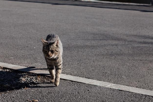 Chat sans-abri