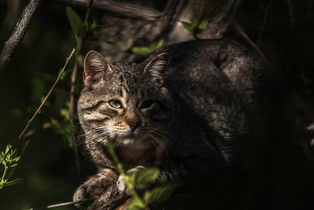 Chat sauvage accroupi à l'ombre de la végétation
